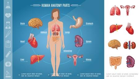 Cartoon vrouw lichaam organen concept met hersenen maag longen nieren hart lever milt darm vrouwelijk voortplantingssysteem vectorillustratie
