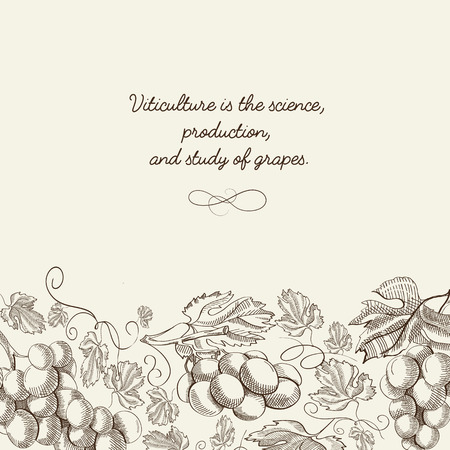Abstract light organic poster with bunches of grapes and inscription in engraving style vector illustration Ilustração