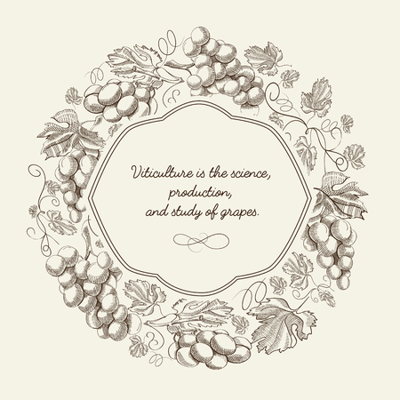 Abstract decorative natural sketch poster with bunches of grapes and inscription in elegant frame vector illustration Ilustração