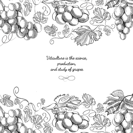 Upper and under horizontal elegant scroll ornament engraving grape bunches border and luxury berries hand drawn sketch vector illustration Иллюстрация