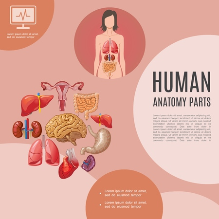 Cartoon human anatomy template with woman body lungs liver kidneys heart brain stomach intestine spleen uterus vector illustration