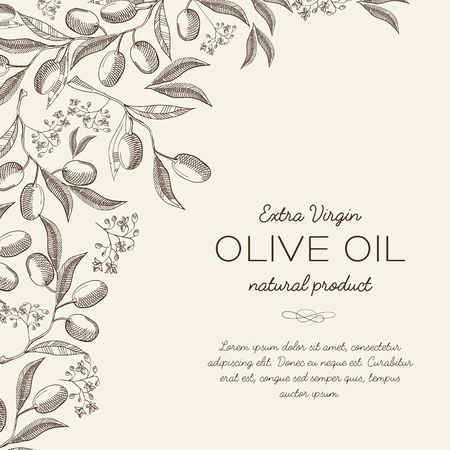 Abstract botanical light background with text and elegant olive tree branches in engraving style vector illustration Ilustracja