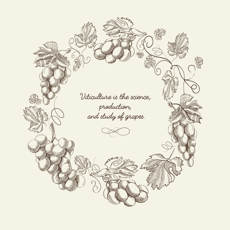 Abstract natural wreath vintage template with bunches of grapes and quote in sketch style vector illustration Ilustração