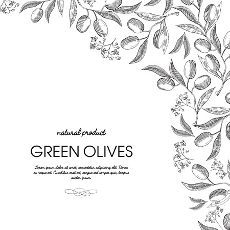 Corner frame elegant scroll ornament engraving green olives bunches border hand drawn doodle card