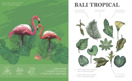 Sketch tropical Bali concept with flamingos beautiful palm banana monstera philodendron frangipani leaves and plants vector illustration Ilustracja