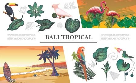 Sketch tropical elements composition