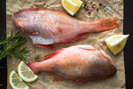 norvegicus: raw Sebastes (red grouper) Stock Photo