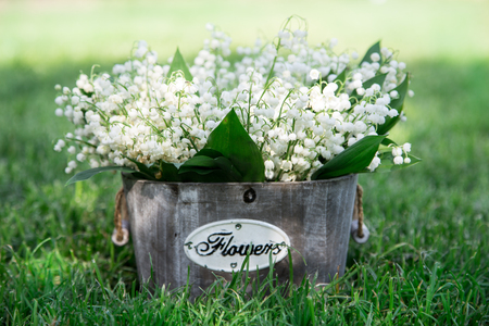 Bouquet of lilies of the valley in a basket. floral background with places for your text Stock Photo