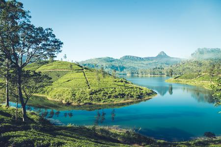 beautiful landscape of sri lanka. river, mountains and tea plantations. 스톡 콘텐츠