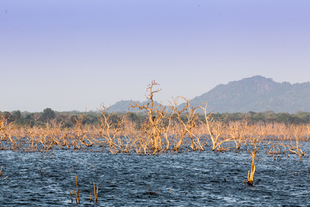 Withered tree branch in the lake nature view with mountin in Sri lanka national park