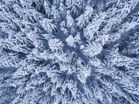 Winter forest with frosty trees, aerial view/ aerial drone view of the snow-covered woods Foto de archivo - 136062113