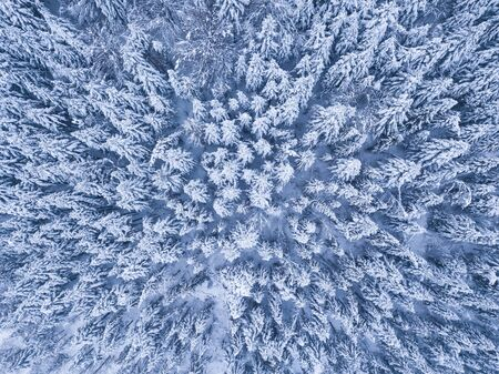 Winter forest with frosty trees, aerial view/ aerial drone view of the snow-covered woods Foto de archivo - 136062133