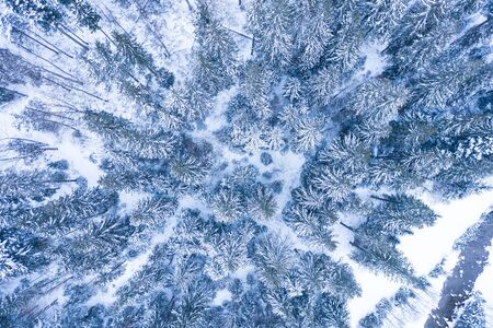 Winter forest with frosty trees, aerial view/ aerial drone view of the snow-covered woods Foto de archivo - 136062135