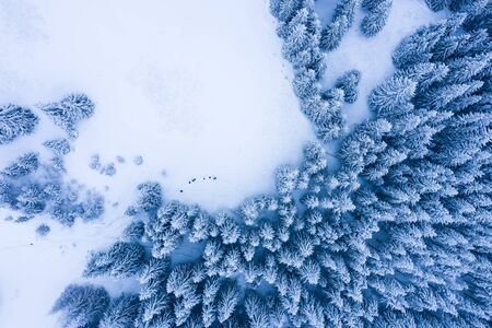 Winter forest with frosty trees, aerial view/ aerial drone view of the snow-covered woods Foto de archivo - 136062136