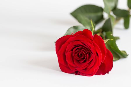 Red roses on white background. Valentines Day background, wedding day. Foto de archivo - 137446639