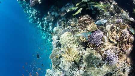 Coral Reef at the Red Sea,Egypt. Underwater landscape with fish and reefs/ Foto de archivo - 137446649