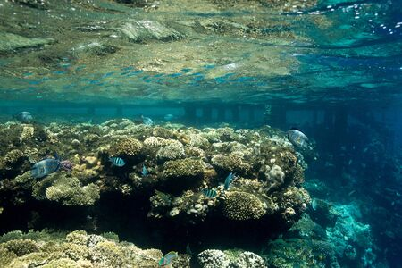 Coral Reef at the Red Sea,Egypt. Underwater landscape with fish and reefs/ Foto de archivo - 137447022