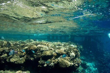Coral Reef at the Red Sea,Egypt. Underwater landscape with fish and reefs/ Foto de archivo - 137447494
