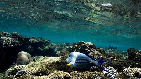 Coral Reef at the Red Sea,Egypt. Underwater landscape with fish and reefs/ Foto de archivo - 137447124