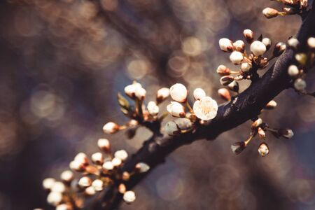 Spring blossom: branch of a blossoming tree on bokeh background. Foto de archivo - 138937763