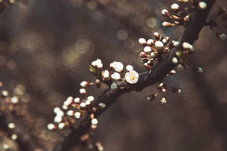 Spring blossom: branch of a blossoming tree on bokeh background. Foto de archivo - 138938519