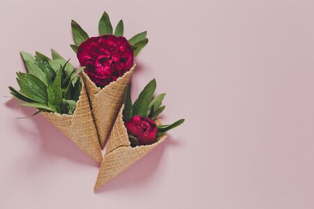 peony and leaves in  icecream cone on pink background. Flat lay 版權商用圖片 - 147913603