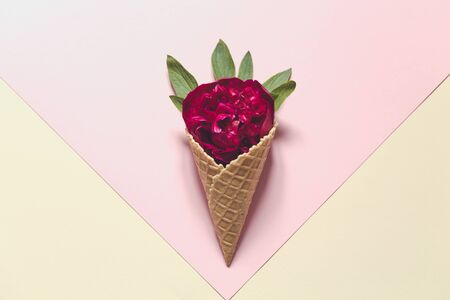 peony and leaves in  icecream cone on pink background. Flat lay