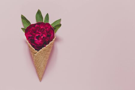 peony and leaves in  icecream cone on pink background. Flat lay 版權商用圖片 - 147908443