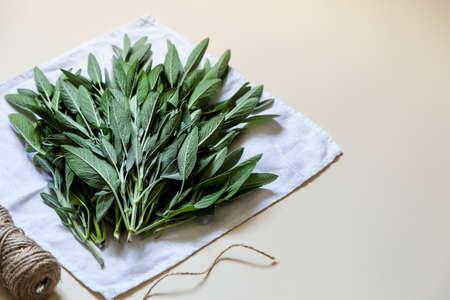 Salvia officinalis. Sage leaves, Garden sage. Copy space 스톡 콘텐츠