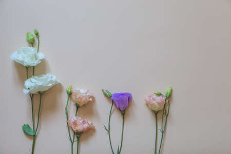 beautiful flowers on a delicate background. selective focus, Flat lay, top view, copy space Zdjęcie Seryjne