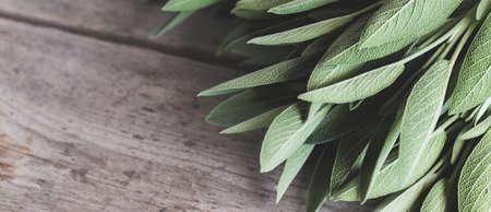 sage leaf bouquet. Sage on a wooden background. 스톡 콘텐츠