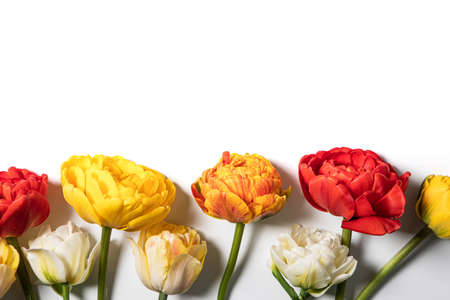 tulip flowers bouquet on white background. Flat lay, top view floral festive holiday concept. place for your text, selective focus,