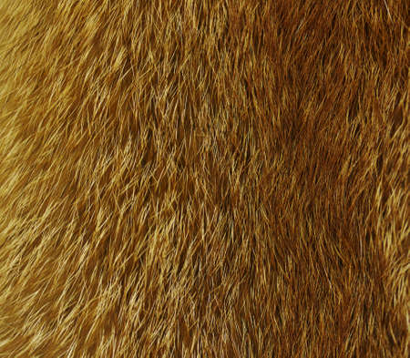 fox fur: Red fox fur Stock Photo