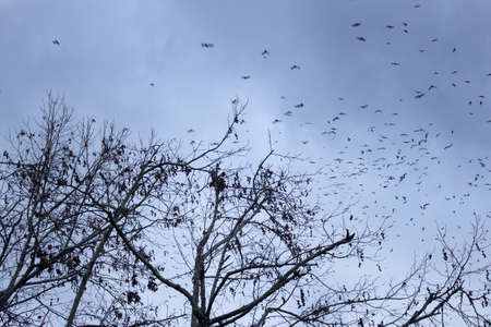 A flock of birds in the dark sky Stock Photo - 17230253