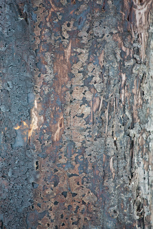 industrial noise: Shiny silver brushed metal surface and rust