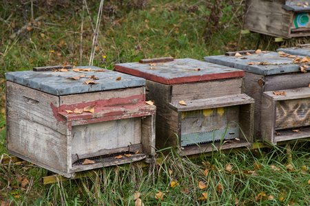 Beehives for honey production.