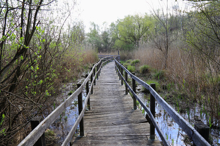 Walkway or wooden walkway to cross the swamp Stock Photo