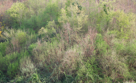Stretch of woods with dominance of young shrubs