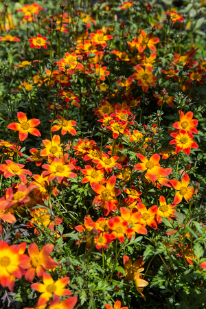 pollinate: Colorful variety of red and yellow flowers