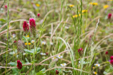Pointes rouges dans un champ fleuri Banque d'images - 80351581