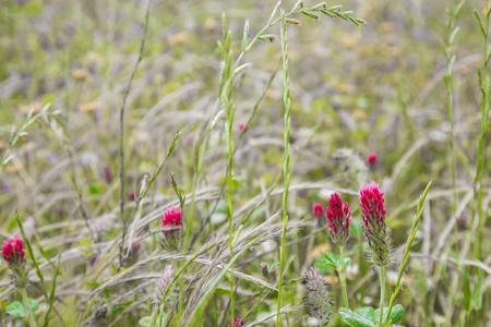 Pointes rouges dans un champ fleuri Banque d'images - 80283009