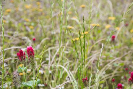 Pointes rouges dans un champ fleuri Banque d'images - 80283010