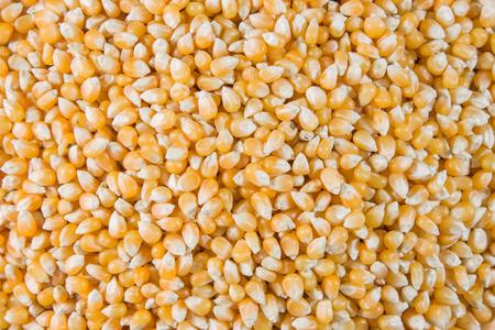 トウモロコシは、密接に見られるポップコーンを作る。