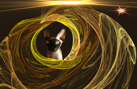 improvisation: Improvisation on the theme of the fractal, the cat and the stars