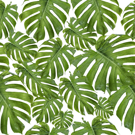 Seamless pattern of green palm leaves. Summer style for beach and leisure.