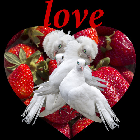 Two couple of white doves on the scarlet background of the heart of fresh strawberries.