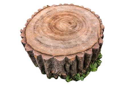 Clear annual rings on the stump cut closeup. Isolated tree stump on white background Foto de archivo