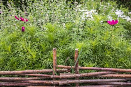Blooming garden behind a wicker fence. Idyllic rustic wicker fence backdrop with lovely flowers. Foto de archivo