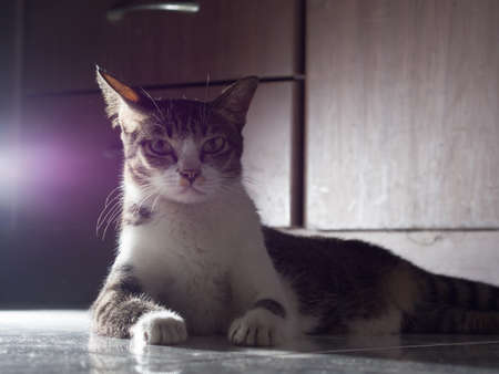 backlite: White Cat Starring Seriously