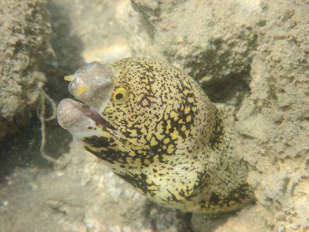 mar-anguilas en el Mar Rojo  Foto de archivo - 2038900